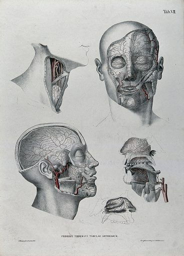 Dissections of the face, neck and jaw: five figures, with the arteries and blood vessels indicated in red. Coloured lithograph by J Roux, 1822. Created 1822. Human anatomy. Contributors: Jakob Wilhelm Christian Roux (1775–1831); Friedrich Tiedemann (1781–1861). Work ID: vm886p3b.