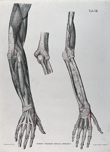 Dissections of the arm, hand and elbow joint; three figures, with the blood vessels indicated in red. Coloured lithograph by J Roux, 1822. Created 1822. Human anatomy. Contributors: Jakob Wilhelm Christian Roux (1775–1831); Friedrich Tiedemann (1781–1861). Work ID: crnxkqhk.
