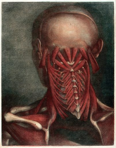 Head and neck of an écorché figure, seen from behind. Coloured mezzotint by M Duverny after JF Gautier d'Agoty, ca 1780. Created 1780?. Human anatomy. Contributors: Gautier Dagoty (1717–1785); Du Verney, M (1648–1730). Work ID: ehdzc9cn.