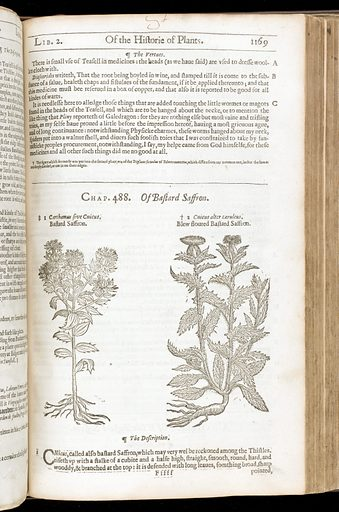 The herball, or general historie of plantes. Work ID: nfqgwnrf.
