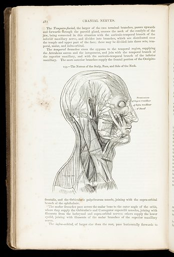 Illustration of nerves of the scalp, face and neck. Contributors: H V Carter. Work ID: njr6hp59.
