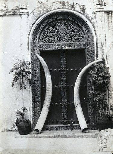 An ornate carved doorway in Zanzibar, with an enormous pair of elephant's tusks leaning against it. Photograph by ARP de Lord, ca1900. Zanzibar. Contributors: A R P de. Lord. Work ID: zv993d7t.
