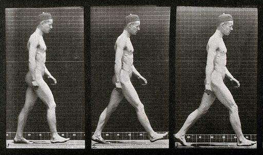 A man walking. Collotype after Eadweard Muybridge, 1887. Sequence. Photograph. Contributors: Eadweard Muybridge; University of Pennsylvania. Work ID: c568zpgg.