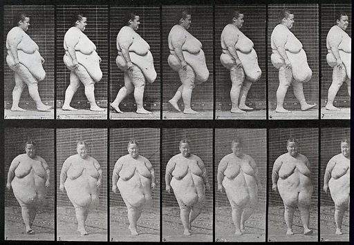 A gargantuan woman walking. Collotype after Eadweard. Sequence. Photograph. EADWEARD MUYBRIDGE. HUGE. Contributors: Eadweard Muybridge; University of Pennsylvania. Work ID: s9sbg97g.