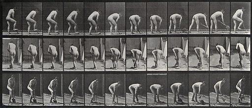 A man digging with a spade. Photogravure after Eadweard Muybridge, 1887. Sequence. Photograph. Contributors: Eadweard Muybridge; University of Pennsylvania. Work ID: dpvqu34u.