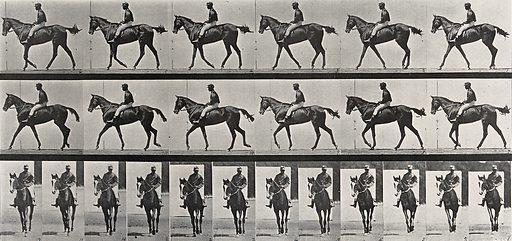 A jockey riding a race-horse. Collotype after Eadweard Muybridge, 1887. Created 1887. Horses. Contributors: Eadweard Muybridge (1830–1904); University of Pennsylvania. Work ID: jjxt2f5d.