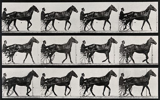 A horse drawing a chariot and driver. Collotype after Eadweard Muybridge, 1887. The horse was Edgington, owned by Leland Stanford: Haas, op. cit., p 183. Created 1887. Horses. Contributors: Eadweard Muybridge (1830–1904); University of Pennsylvania. Work ID: ju4t7e35.