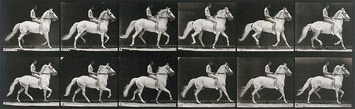 A horse walking. Collotype after Eadweard Muybridge, 1887. Created 1887. Horses. Contributors: Eadweard Muybridge (1830–1904); University of Pennsylvania. Work ID: ds6f8kmy.