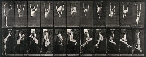 A gymnast performing on the rings. Collotype after Eadweard Muybridge, 1887. Created 1887. Contributors: Eadweard Muybridge (1830–1904); University of Pennsylvania. Work ID: qbd5uxfp.