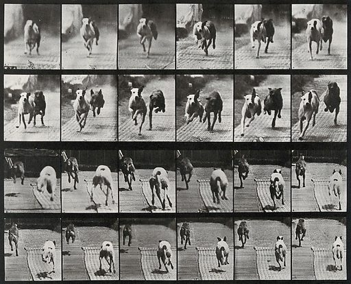 Two dogs racing. Collotype after Eadweard Muybridge, 1887. Created 1887. Contributors: Eadweard Muybridge (1830–1904); University of Pennsylvania. Work ID: e3eqee2r.