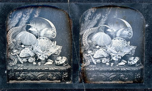 The Crystal Palace, London (?): an exhibit of sea-shells. Photograph, 1851/1862. Created 1851–1862. Work ID: hwwzesuh.