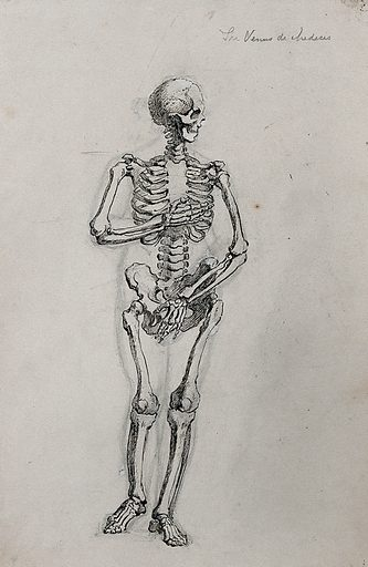 A skeleton in the pose of the Venus de' Medici. Pen and ink drawing. Work ID: vybnnvdp.