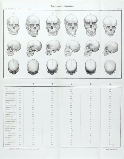 Skulls. Work ID: eszafyj8.