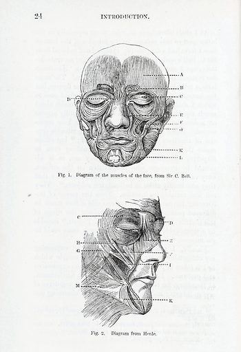Diagrams of muscles of the face from Darwins Expressions…. Diagrams of the muscles of the human face in the introduction of Darwin's book. Top, Diagram of the muscles of the face from Sir C Bell, bottom, diagram from Henle. Contributors: Freidrich Gustav Jakob Henle; Charles Bell. Work ID: uxhgfser.