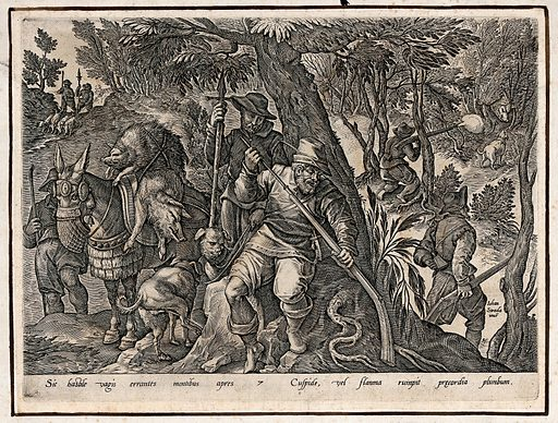 Hunting: dogs sniff around as boar are tracked, shot and strung up on horseback, killed by lead bullets. Engraving by Philipps Galle after Jan van der Straet. Created 1600?. Wild boar hunting. Contributors: Jan van der Straet (1523–1605); Philippe Galle (1537–1612). Work ID: ucnbkgtw.