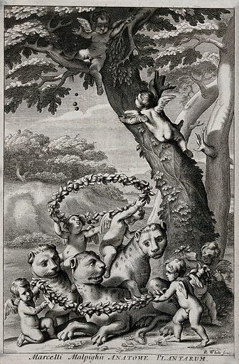 Cherubim playing with lions under a tree. Engraving by R White, 1675. Created 1675. Contributors: Robert White (1645–1703); Marcello Malpighi (1628–1694). Work ID: eg9rw6za.