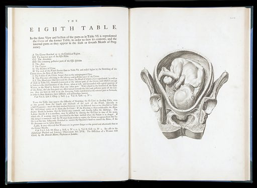 """The eighth table from """"A sett of anatomical tables.."""". The eighth table from """"A sett of anatomical tables"""". Work ID: phw24wr5."""