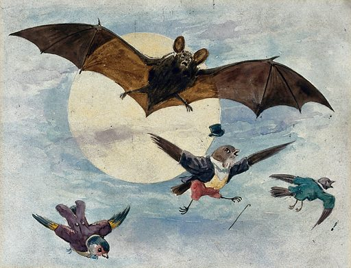 A bat and three fully dressed birds flying by moonlight. Drawing by G Hope Tait, ca 1900. Created 1900. Contributors: Geo. Hope Tait (1861–1943). Work ID: wpg78qt7.
