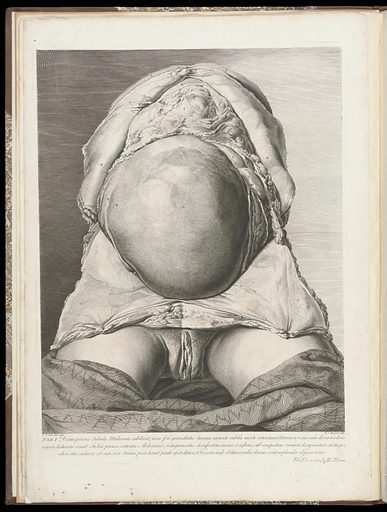 The anatomy of the human gravid uterus exhibited in figures, – Plate I Work ID: x58ufvym.