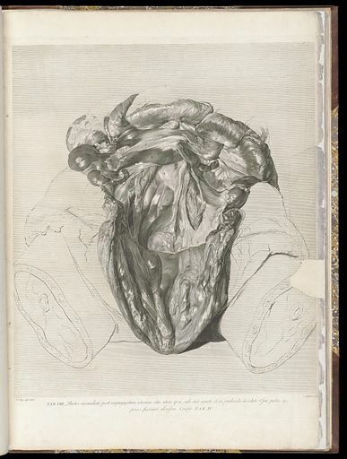 The anatomy of the human gravid uterus exhibited in figures, – Plate VIII. Work ID: krmjcerc.