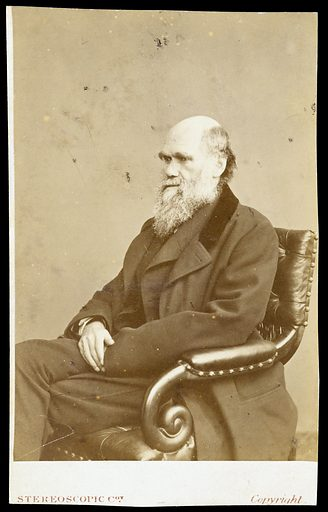 Charles Robert Darwin. Photograph by the London Stereoscopic & Photographic Company. Work ID: gh6c9gey.