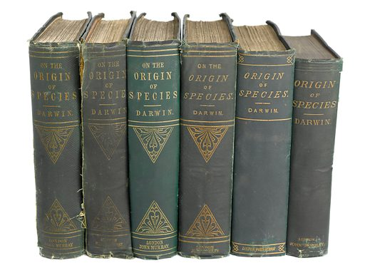 6 editions of 'The Origin of Species' by C Darwin,. 6 editions of 'The Origin of Species' by Charles Darwin, showing the books' spines. Work ID: fwbcj6yd.