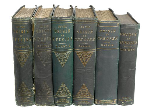 6 editions of 'The Origin of Species' by C Darwin,. 6 editions of 'The Origin of Species' by Charles Darwin, showing the books' spines. Work ID: azr5wcwr.