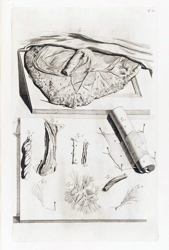 Illustration of a placenta, with additional parts shown underneath. Work ID: rhb7u5s4.