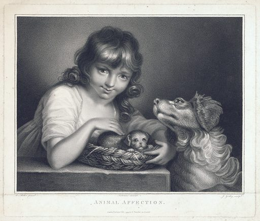 """A girl stroking a puppy, and being nudged with affection by the puppy's mother. Stipple engraving by J Godby, 1799, after G Testolini after W Miller. """"Animal affection"""": apparently meaning the natural affection which the innocent girl has for the puppy, and the affection which the bitch (though an animal) has towards the girl for her kindness to the puppy. Created Feb. 1 1799. Children and animals. Emotions in children. Emotions in animals. Dogs. Contributors: William Miller, ca (1740–approximately 1810); Gaetano Testolini (active 1760–1818); J Godby (active 1798–1812). Work ID: z34hpjkj."""