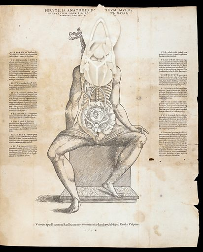 Anatomical fugitive sheets. Interiorum corporis humani partium viva delineatio. Work ID: v24bpt4d.