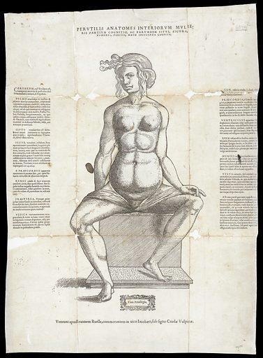 Anatomical fugitive sheets. Perutilis anatomes interiorum mulieris partium cognitio, ac earumdem situs, figura, numerus, positio, haud iniucunda cognitu. Work ID: zvtdmhc6.