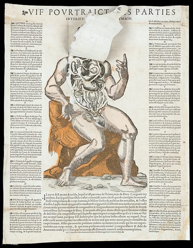 Anatomical fugitive sheets. Vif pourtraict des parties interieures du corps humain. Work ID: yxy5p536.