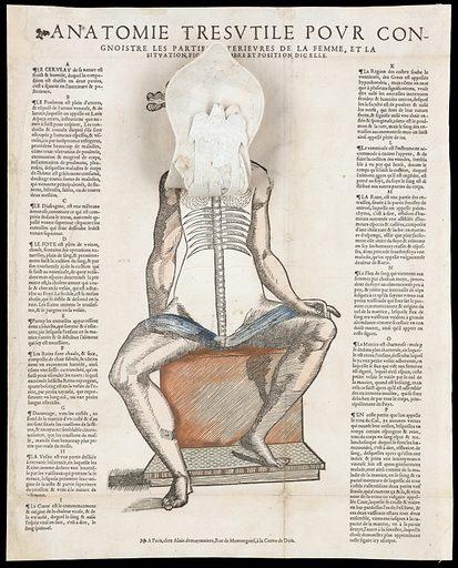 Anatomical fugitive sheets. Vif pourtraict des parties interieures du corps humain. Work ID: swygrx2d.