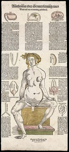 Anatomical fugitive sheets. Anathomia oder abconterfettung eynes Mans leib, wie er inwendig gestaltet ist. Work ID: cb879k9b.