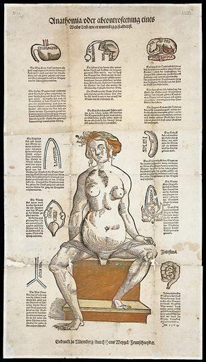 Anatomical fugitive sheets. Anathomia oder abcontrofettung eines Weibs leib, wie er inwendig gestaldet ist. Work ID: cryzukfr.