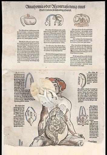Anatomical fugitive sheets. Anathomia oder abcontrafectung eines Weibs leib, wie sie inwendig gestalt ist. Work ID: w9xyts8m.