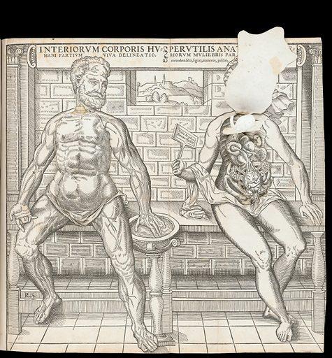 Anatomical fugitive sheets. Interiorum corporis humani partium viva delineatio. Perutilis anatomes interiorum muliebris partium cognitio ac earundem situs, figura, numerus, positio, hand [sic] iniucounda cognitu. Work ID: kc9ewu9s.