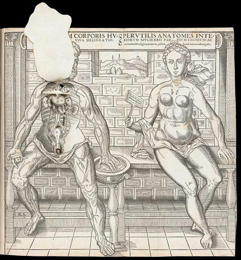 Anatomical fugitive sheets. Interiorum corporis humani partium viva delineatio. Perutilis anatomes interiorum muliebris partium cognitio ac earundem situs, figura, numerus, positio, hand [sic] iniucounda cognitu. Work ID: bydfnww8.