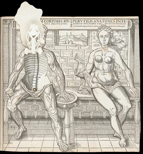 Anatomical fugitive sheets. Interiorum corporis humani partium viva delineatio. Perutilis anatomes interiorum muliebris partium cognitio ac earundem situs, figura, numerus, positio, hand [sic] iniucounda cognitu. Work ID: kkxgv2dw.