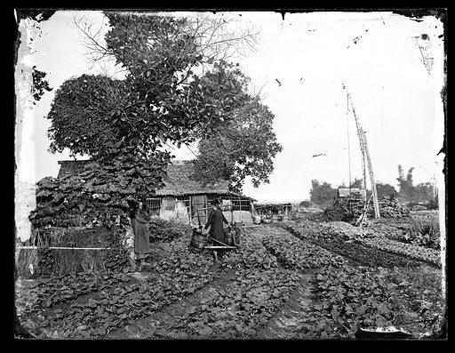 Cochin China [Vietnam]. Photograph by John Thomson, 1867. Contributors: J Thomson. Work ID: rtpw93mr.