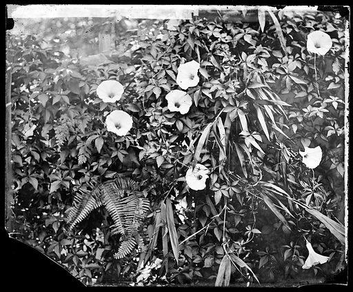 Cochin China [Vietnam]. Photograph by John Thomson, 1867. Contributors: J Thomson. Work ID: y2r2bu9g.