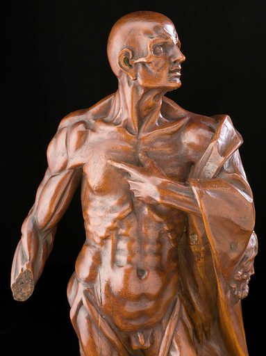 Statue of St Bartholomew, Europe, 1501–1700. St Bartholomew was martyred by being flayed (skinned) alive in Armenia after bringing Christianity to the country in the first century CE. The saint is often depicted with his skin hung across his back or over his arm and with the muscles of the body visible. Due to the way he was martyred, St Bartholomew is the patron saint of tanners. This example has been carved from wooden and painted. Many Catholics believe that saints can protect against ill health and may help cure specific diseases. Contributors: Science Museum, London. Work ID: qz7dekkt.