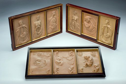 Set of nine wax plaques showing foetal development and disse. This series of nine wax plaques shows both the development of a foetus during pregnancy plus anatomical details from the dissection of a young, pregnant female figure. Such images would have been used to teach anatomy through illustrating the essential parts of the body during pregnancy. Dissections were normally carried out on the bodies of criminals but as pregnant women could not be executed, opportunities to study the pregnant body were rare. Contributors: Science Museum, London. Work ID: mj5vkv3u.