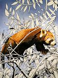 Nature's Kingdom: Cat-bear of the Himalayas –  the lesser panda