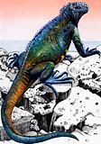 Nature's Kingdom –  Iguana