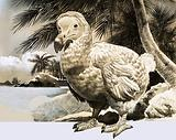 The World of Nature: The Mystery Bird from Mauritius (The Dodo)