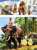Elephants at work and Hannibal crossing the Alps