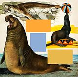 Seals and Sea-Lions, including seal balancing ball on nose
