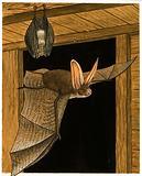 Horseshoe bats