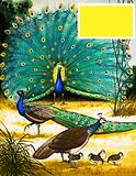 Peafowl and Pheasants